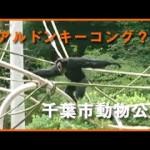 【千葉グルメ】千葉市動物公園に新名物? リアルドンキーコングを発見!